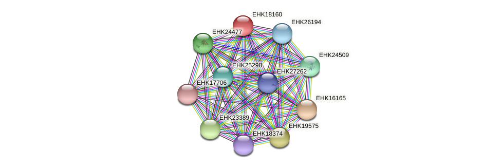 EHK18160 protein (Hypocrea virens) - STRING interaction network