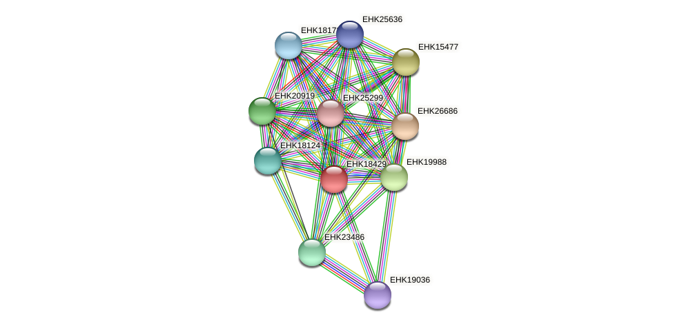 EHK18429 protein (Hypocrea virens) - STRING interaction network