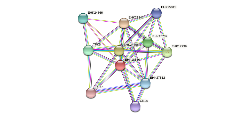 EHK18550 protein (Hypocrea virens) - STRING interaction network