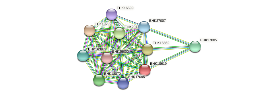 EHK18619 protein (Hypocrea virens) - STRING interaction network