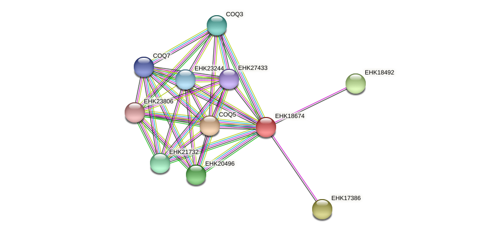 EHK18674 protein (Hypocrea virens) - STRING interaction network
