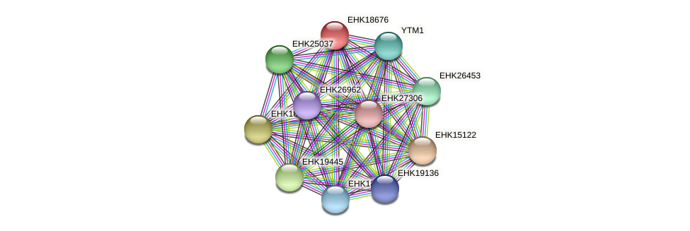 EHK18676 protein (Hypocrea virens) - STRING interaction network