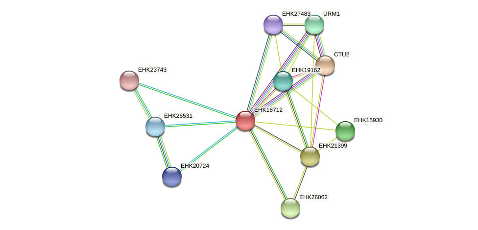EHK18712 protein (Hypocrea virens) - STRING interaction network