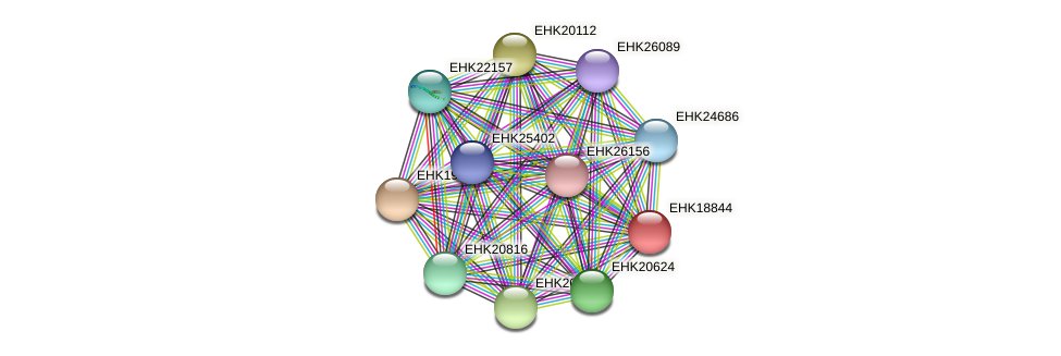 EHK18844 protein (Hypocrea virens) - STRING interaction network