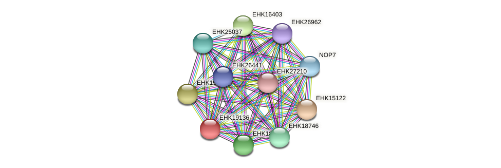 EHK19136 protein (Hypocrea virens) - STRING interaction network