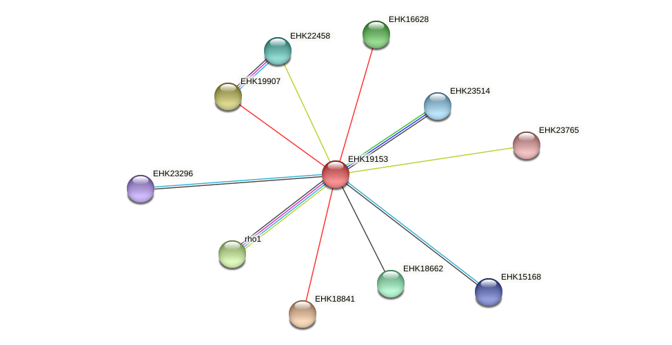 EHK19153 protein (Hypocrea virens) - STRING interaction network