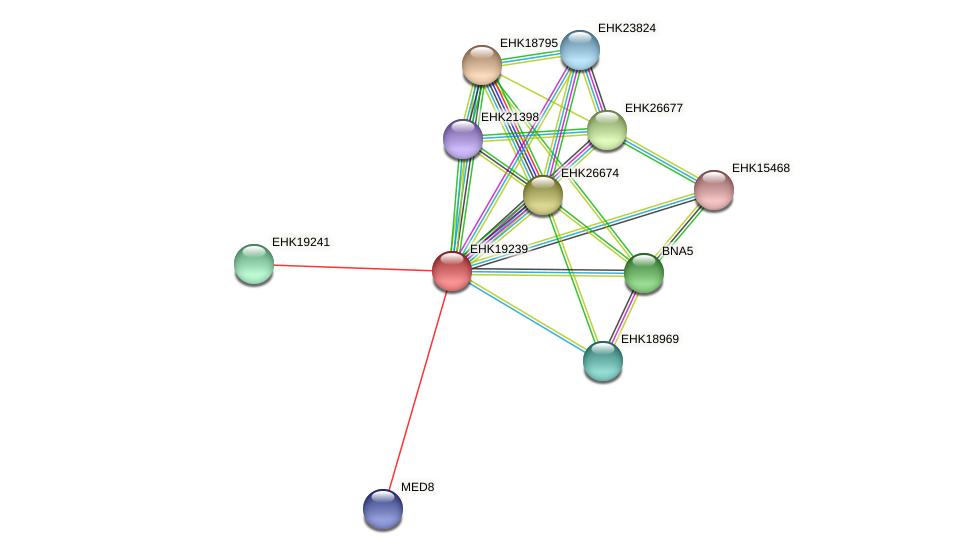 EHK19239 protein (Hypocrea virens) - STRING interaction network