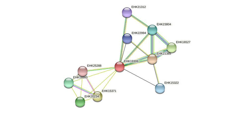 EHK19306 protein (Hypocrea virens) - STRING interaction network