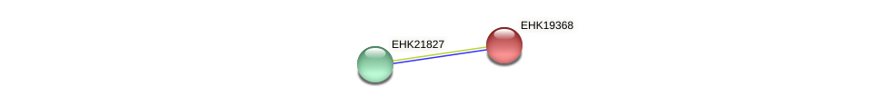 EHK19368 protein (Hypocrea virens) - STRING interaction network