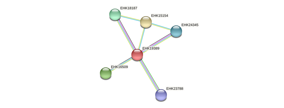 EHK19389 protein (Hypocrea virens) - STRING interaction network