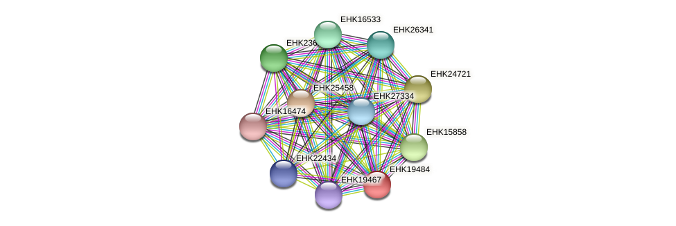 EHK19484 protein (Hypocrea virens) - STRING interaction network