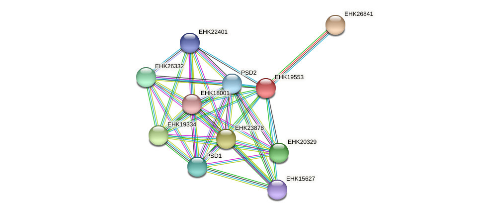 EHK19553 protein (Hypocrea virens) - STRING interaction network