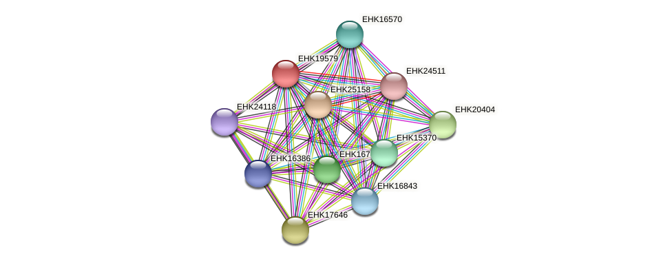 EHK19579 protein (Hypocrea virens) - STRING interaction network