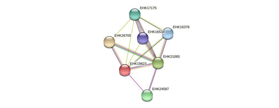 EHK19623 protein (Hypocrea virens) - STRING interaction network