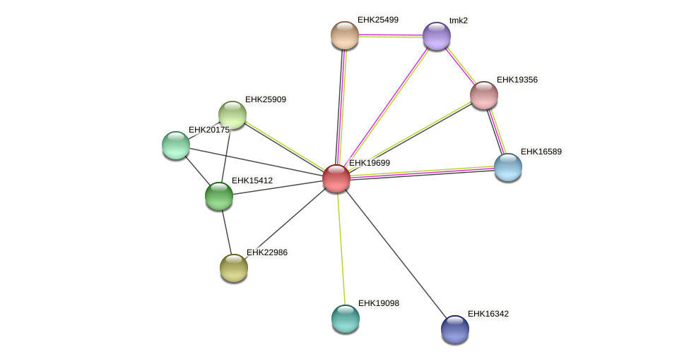 EHK19699 protein (Hypocrea virens) - STRING interaction network