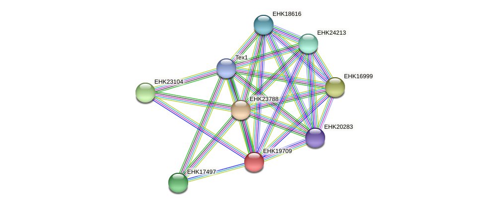 EHK19709 protein (Hypocrea virens) - STRING interaction network