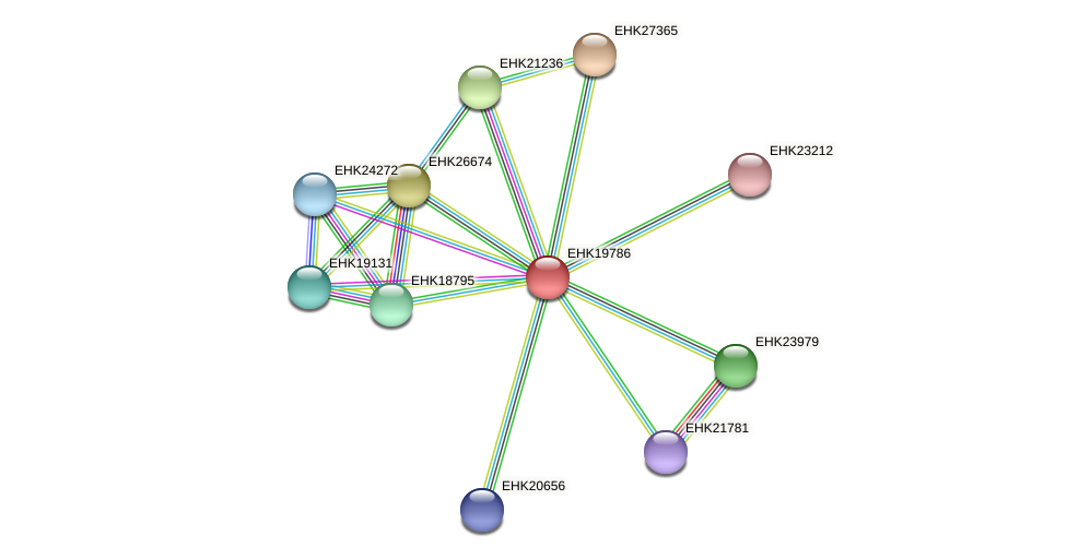 EHK19786 protein (Hypocrea virens) - STRING interaction network