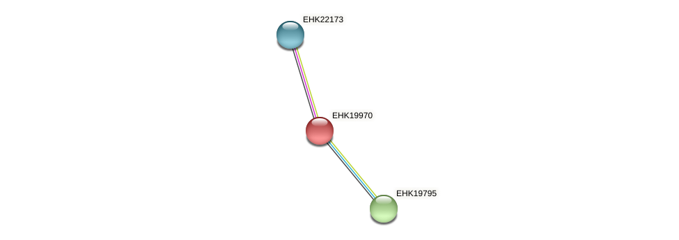 EHK19970 protein (Hypocrea virens) - STRING interaction network