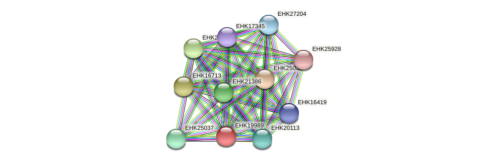 EHK19989 protein (Hypocrea virens) - STRING interaction network