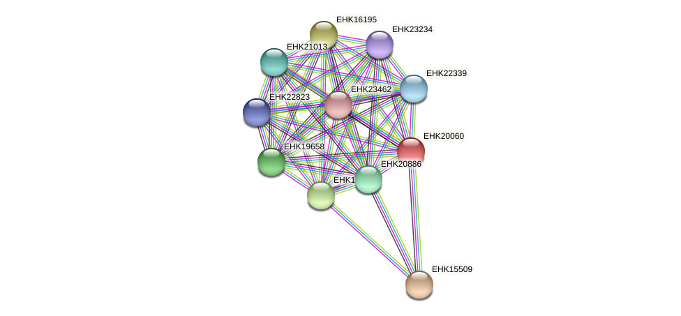 EHK20060 protein (Hypocrea virens) - STRING interaction network