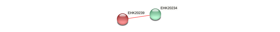 EHK20239 protein (Hypocrea virens) - STRING interaction network