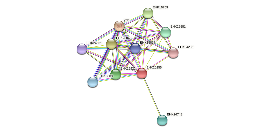 EHK20255 protein (Hypocrea virens) - STRING interaction network