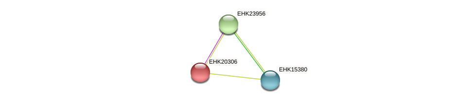 EHK20306 protein (Hypocrea virens) - STRING interaction network