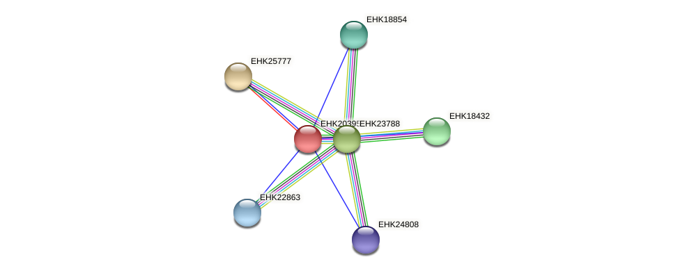 EHK20395 protein (Hypocrea virens) - STRING interaction network