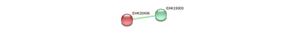 EHK20436 protein (Hypocrea virens) - STRING interaction network