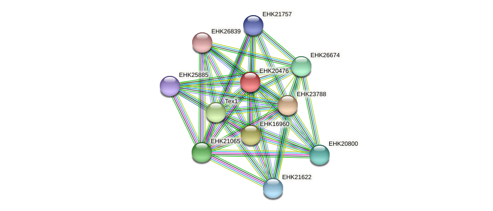 EHK20476 protein (Hypocrea virens) - STRING interaction network