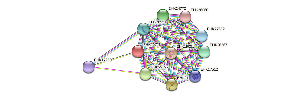 EHK20726 protein (Hypocrea virens) - STRING interaction network