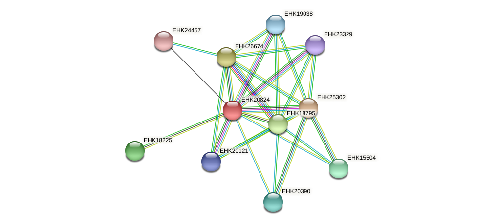 EHK20824 protein (Hypocrea virens) - STRING interaction network