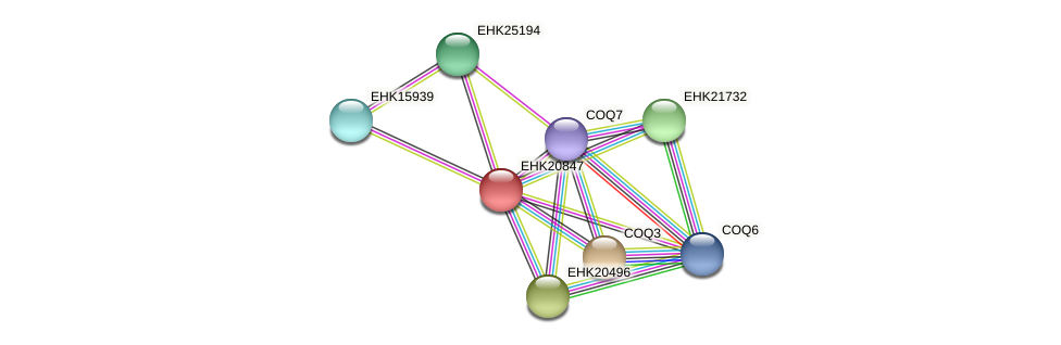 EHK20847 protein (Hypocrea virens) - STRING interaction network