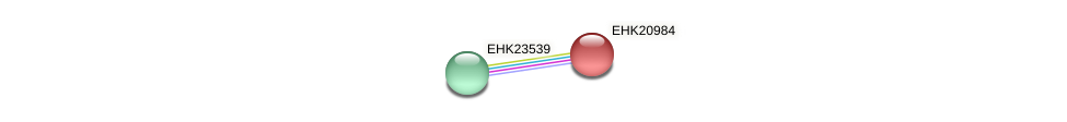 EHK20984 protein (Hypocrea virens) - STRING interaction network