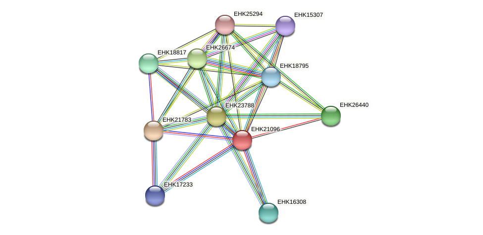 EHK21096 protein (Hypocrea virens) - STRING interaction network