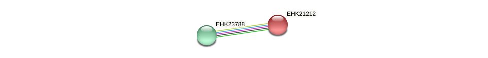 EHK21212 protein (Hypocrea virens) - STRING interaction network