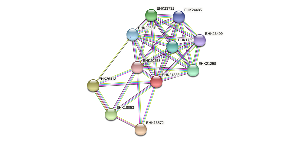 EHK21338 protein (Hypocrea virens) - STRING interaction network