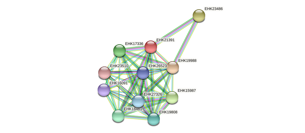 EHK21391 protein (Hypocrea virens) - STRING interaction network
