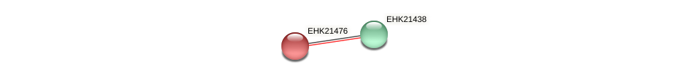 EHK21476 protein (Hypocrea virens) - STRING interaction network
