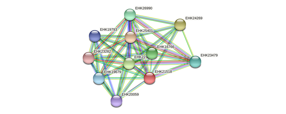 EHK21518 protein (Hypocrea virens) - STRING interaction network