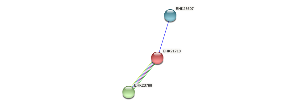 EHK21710 protein (Hypocrea virens) - STRING interaction network