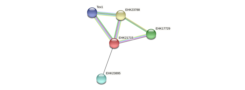 EHK21715 protein (Hypocrea virens) - STRING interaction network