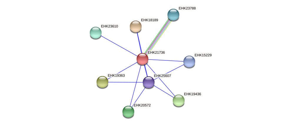 EHK21736 protein (Hypocrea virens) - STRING interaction network