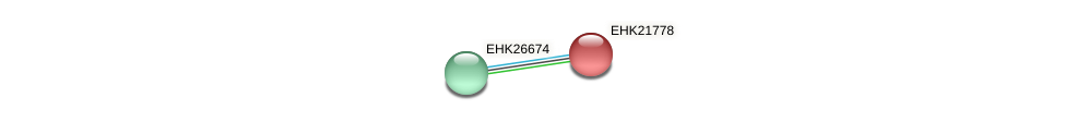 EHK21778 protein (Hypocrea virens) - STRING interaction network