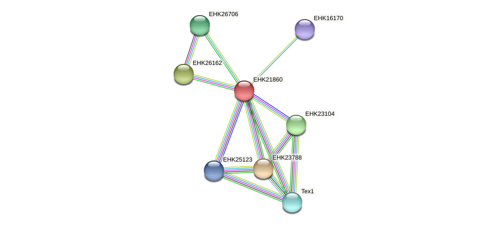 EHK21860 protein (Hypocrea virens) - STRING interaction network