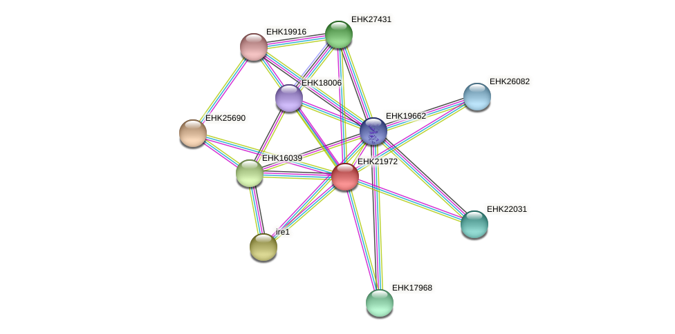 EHK21972 protein (Hypocrea virens) - STRING interaction network
