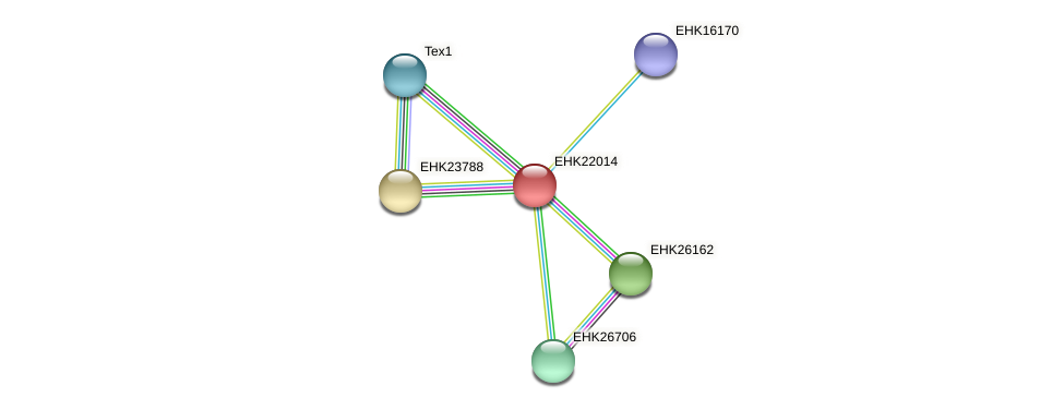EHK22014 protein (Hypocrea virens) - STRING interaction network