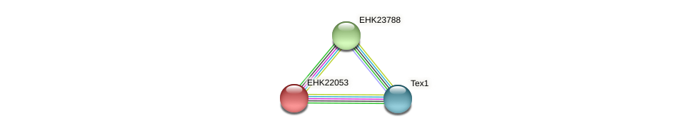 EHK22053 protein (Hypocrea virens) - STRING interaction network