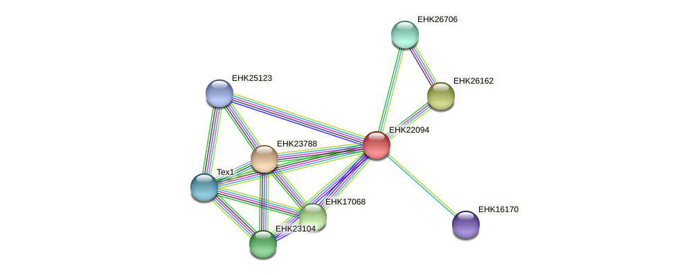 EHK22094 protein (Hypocrea virens) - STRING interaction network