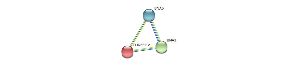 EHK22112 protein (Hypocrea virens) - STRING interaction network